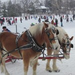 Beautiful horses waiting to give a wagon ride on the ice.