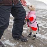 Here Puppy Puppy by Rudi B
