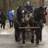 Tradition - Draft Horses by Chuck R